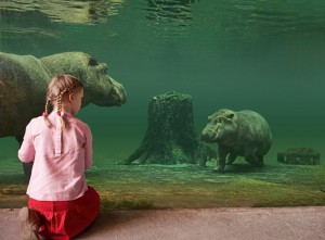 © Zoo Hannover